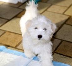 Said puppy of interest
